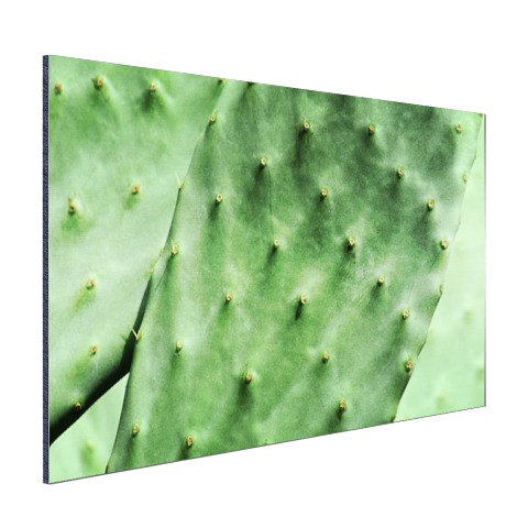 Barbary cactusblad mintgroen Aluminium