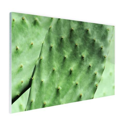 Barbary cactusblad mintgroen Glas
