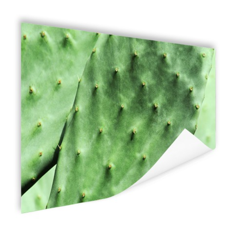 Barbary cactusblad mintgroen Poster