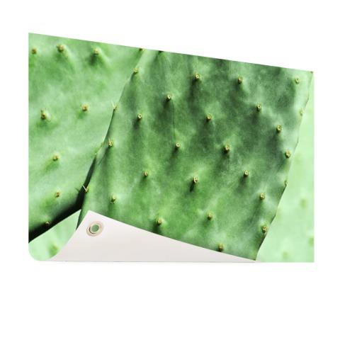 Barbary cactusblad mintgroen Tuinposter