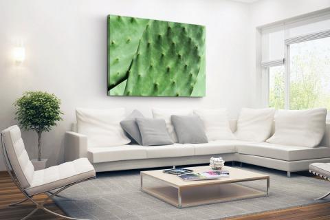 Barbary cactusblad mintgroen Canvas