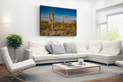 Cactus bij zonsondergang in Arizona Canvas