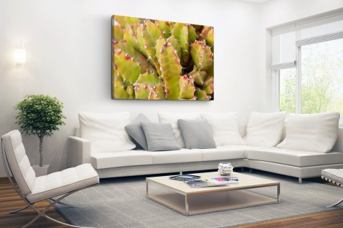 Cactus close-up foto Canvas