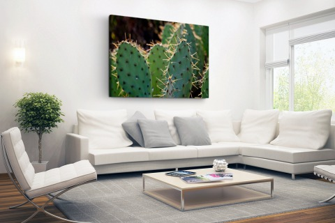 Cactus fotoprint botanic Canvas