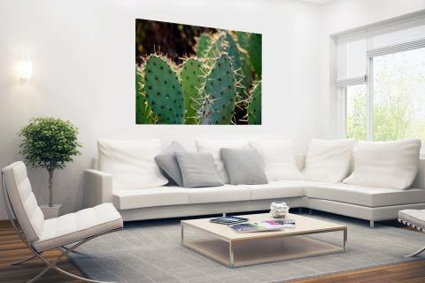 Cactus fotoprint botanic Poster