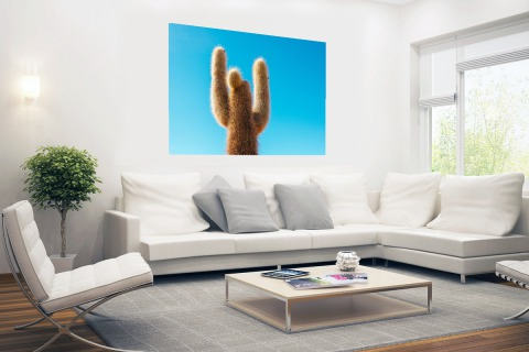 Cactus met blauwe hemel Poster