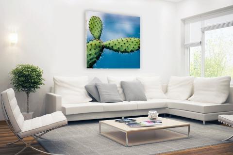 Cactus tegen blauwe lucht Hout