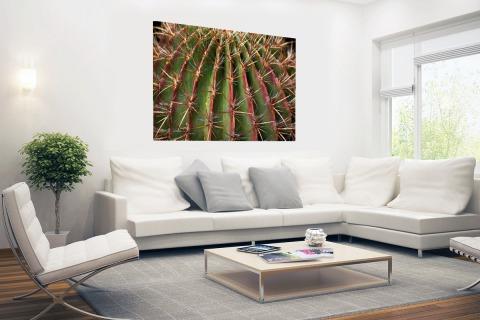 Close-up cactus fotoprint Poster