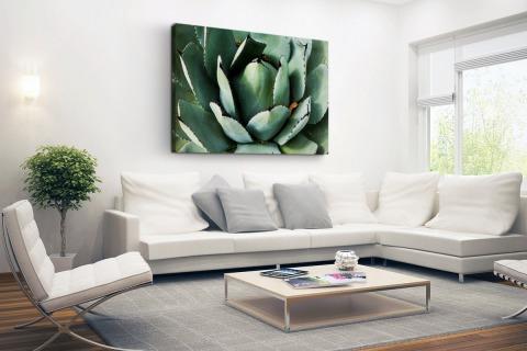 Detailfoto van een mintgroene cactus Canvas