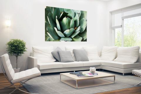 Detailfoto van een mintgroene cactus Poster