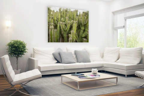 Groep cactusplanten Glas