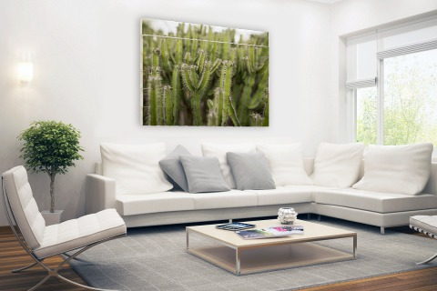 Groep cactusplanten Hout