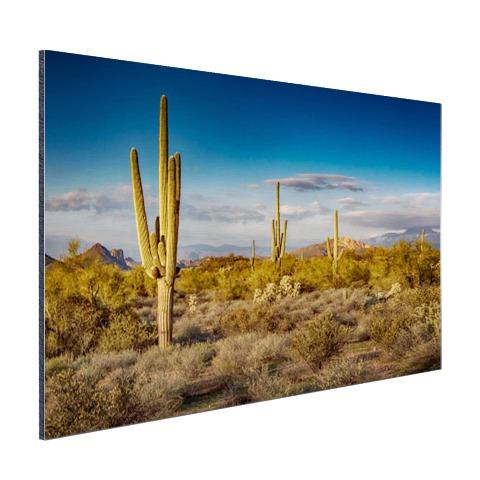 Cactus bij zonsondergang in Arizona Aluminium