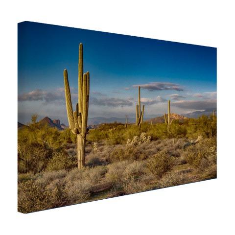 Cactus bij zonsondergang in Arizona Canvas