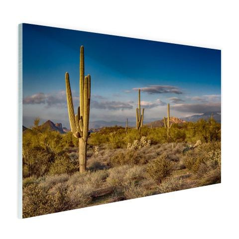 Cactus bij zonsondergang in Arizona Glas