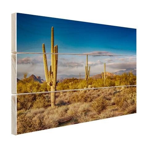 Cactus bij zonsondergang in Arizona Hout