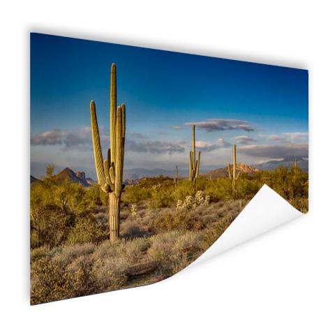 Cactus bij zonsondergang in Arizona Poster