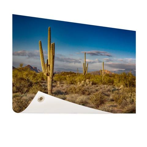 Cactus bij zonsondergang in Arizona Tuinposter