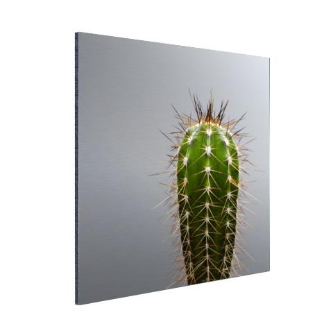 Cactus botanische print Aluminium