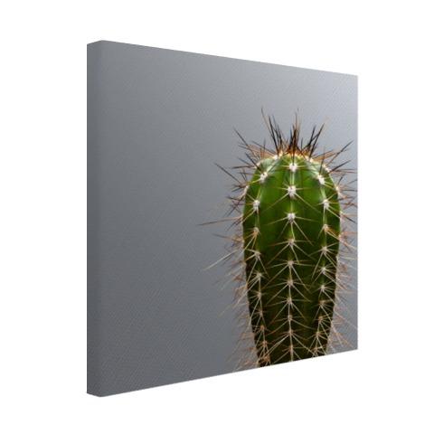 Cactus botanische print Canvas