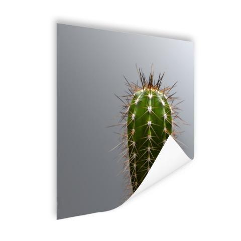 Cactus botanische print Poster