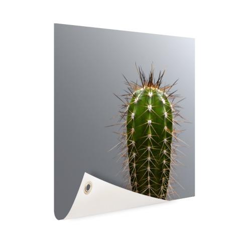 Cactus botanische print Tuinposter
