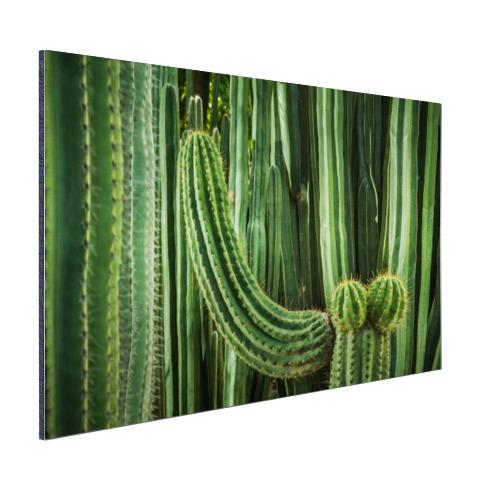 Cactus close-up Aluminium