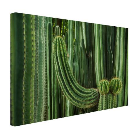 Cactus close-up Canvas