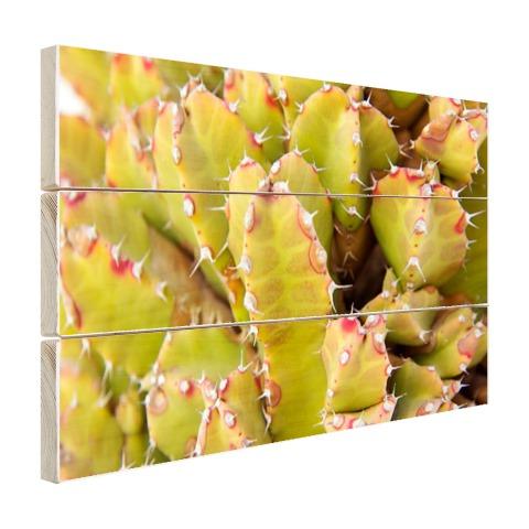 Cactus close-up foto Hout