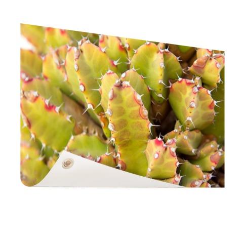 Cactus close-up foto Tuinposter