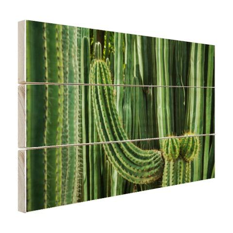 Cactus close-up Hout