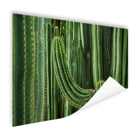 Cactus close-up Poster
