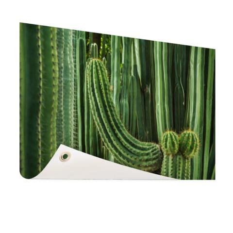 Cactus close-up Tuinposter
