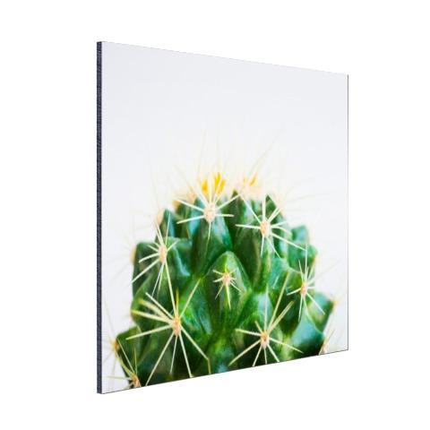 Cactus foto Aluminium