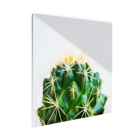 Cactus foto Glas