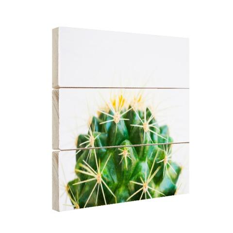 Cactus foto Hout