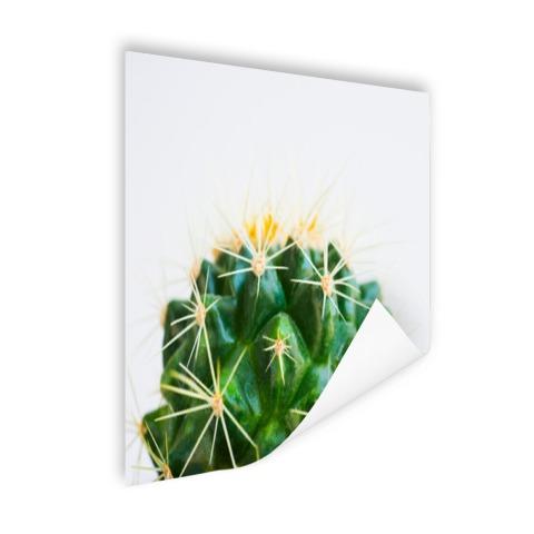 Cactus foto Poster