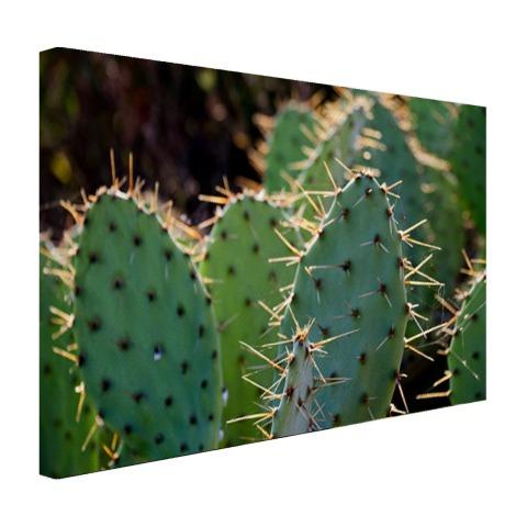 Botanische cactus fotoprint op canvas