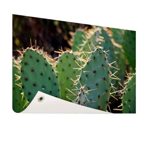 Cactus fotoprint botanic Tuinposter