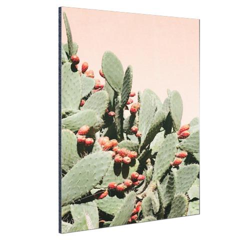 Cactus in Marokko Aluminium