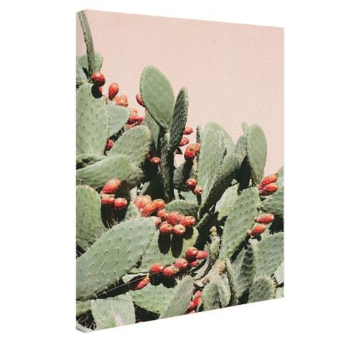 Cactus in Marokko Canvas