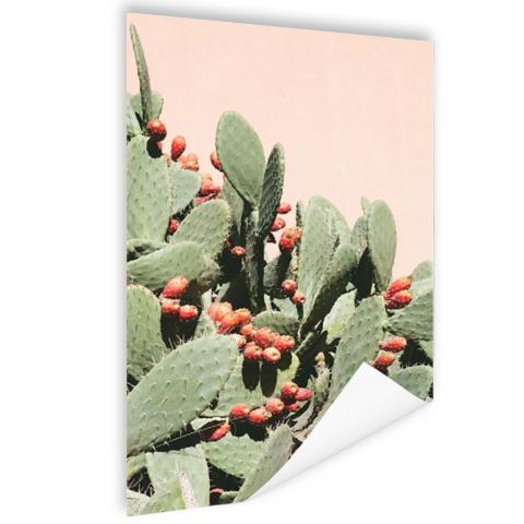 Cactus in Marokko Poster