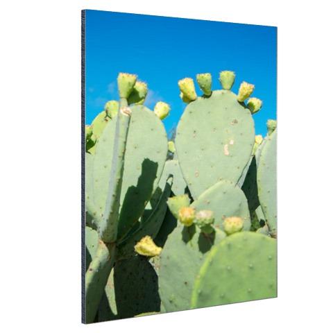 Cactus in USA met blauwe lucht Aluminium