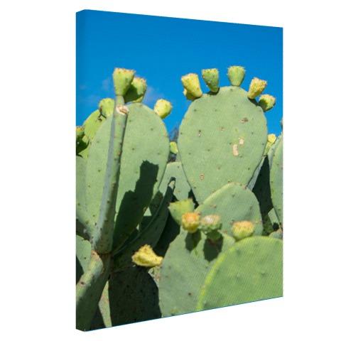Cactus in USA met blauwe lucht Canvas