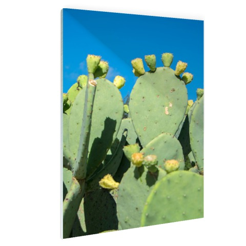 Cactus in USA met blauwe lucht Glas