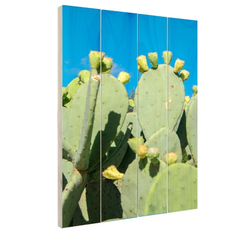 Cactus in USA met blauwe lucht Hout