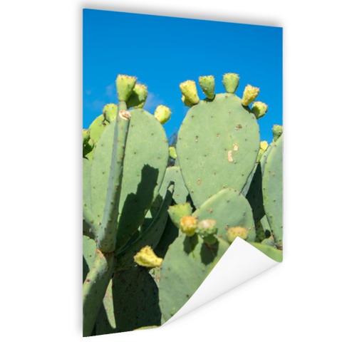 Cactus in USA met blauwe lucht Poster