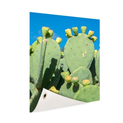 Cactus in USA met blauwe lucht Tuinposter