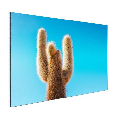 Cactus met blauwe hemel Aluminium