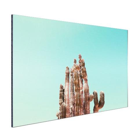 Cactus onder blauwe hemel print Aluminium